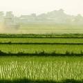 Photos: 青森津軽の日常風景写真1枚~弘南鉄道沿線から農道へ抜けて…