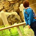 写真: 象に恋する
