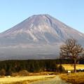 ふもとっぱらから富士山