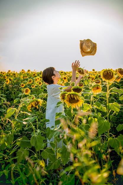 麦わらと向日葵