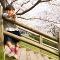 写真: 今年の桜