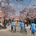 がいせん桜 #2