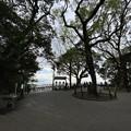 Photos: 城山公園3