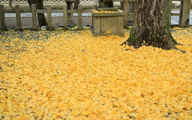 御香宮神社05