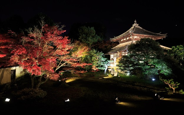 鹿王院・ライトアップ21