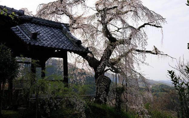 地蔵禅院04