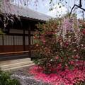 写真: 椿寺(地蔵院)18
