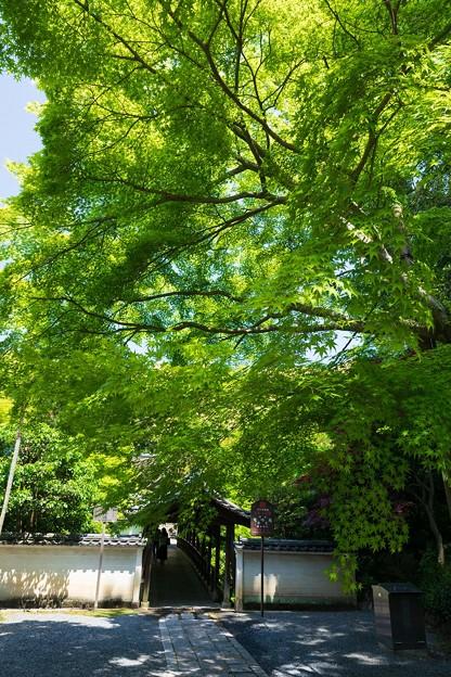 東福寺29