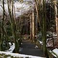 Photos: 高山寺26
