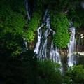 白ひげの滝11