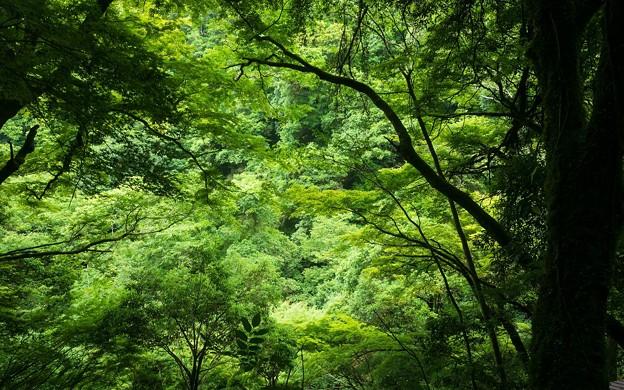天岩戸神社09