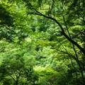 Photos: 天岩戸神社09