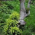 モヒカン頭の街路樹