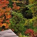 庭先の紅葉1