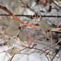 Photos: 冬の情景_1