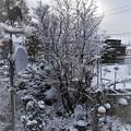 Photos: 雪景_1