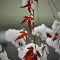 Photos: 雪景_2