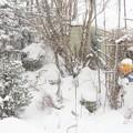 Photos: 雪_1