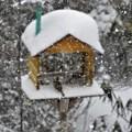 Photos: 雪_2