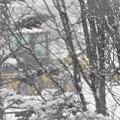 Photos: 雪_3