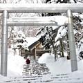 Photos: どんど焼き(1)