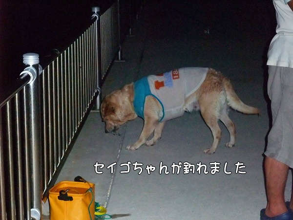 s-2008_0816myu0059