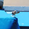 Photos: マイアミの野鳥 #1