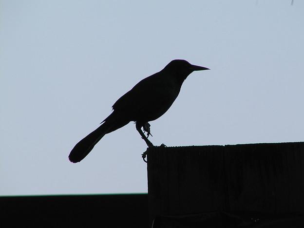 マイアミの野鳥 #2