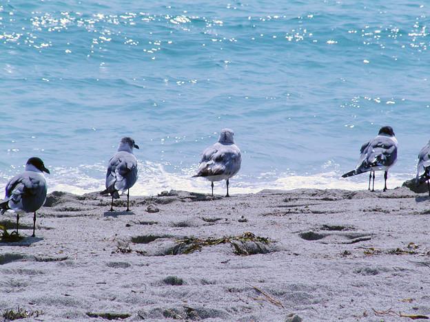 マイアミの野鳥 #4
