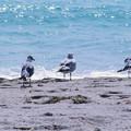Photos: マイアミの野鳥 #4