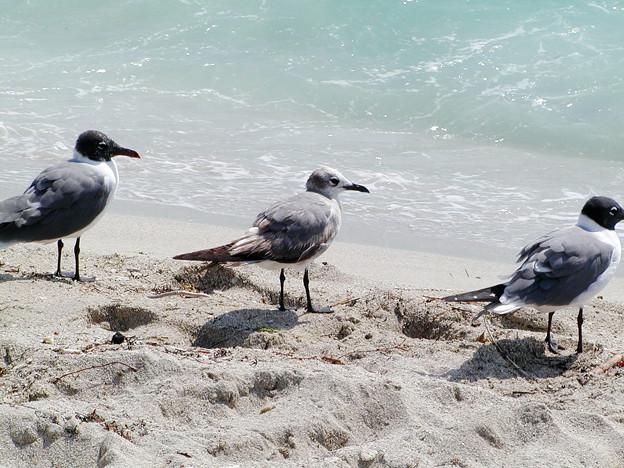 マイアミの野鳥 #7
