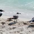 Photos: マイアミの野鳥 #7
