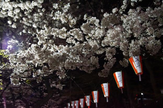 夜桜 #2