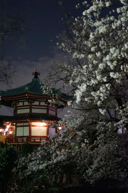 夜桜 #5
