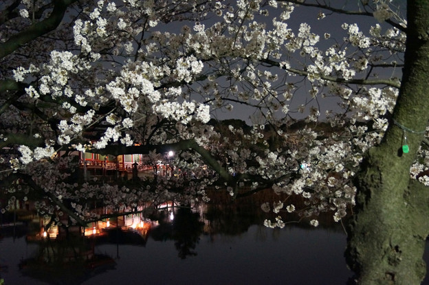 夜桜 #6