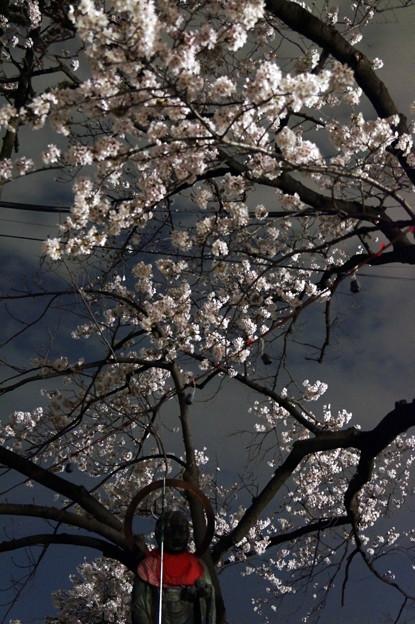 夜桜 #8