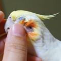 Photos: あくびちゃんの耳の穴