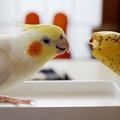 Photos: 大好きなバナナと見つめ合うあくびちゃん