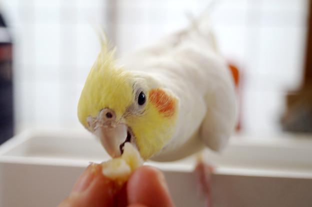 大好物のバナナを食べるあくびちゃん
