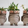 Photos: マゼランペンギン ミニ植木鉢