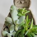 エンペヒナ植木鉢