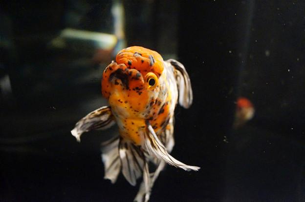 すみだ水族館 #9