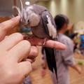 Photos: めっちゃさわれる動物園 #4