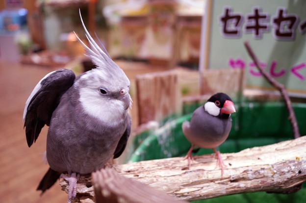 めっちゃさわれる動物園 #5