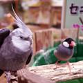 Photos: めっちゃさわれる動物園 #5