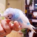 Photos: めっちゃさわれる動物園 #8