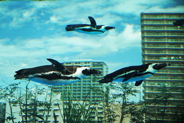 サンシャイン水族館 #1