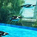 サンシャイン水族館 #2