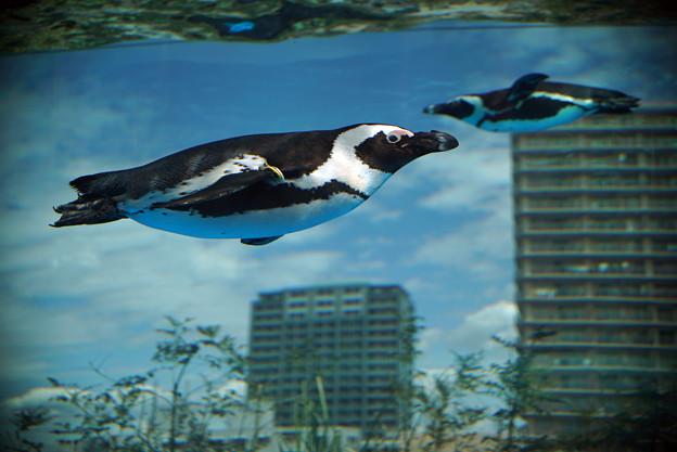 サンシャイン水族館 #4