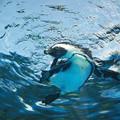 サンシャイン水族館 #5